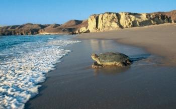 Turtle Care in Oman