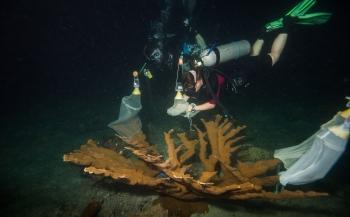 SECORE herstelt Curaçao's koraal