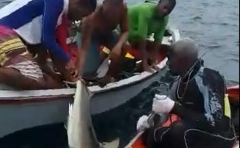 Video van shark finning bij Curaçao duikt op
