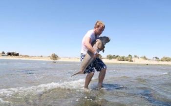 Snorkelaars helpen baby-dugong terug naar zee
