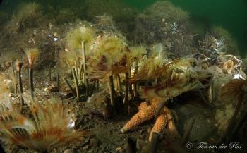 Een veldje pauwkokerwormen - Het verhaal achter de foto