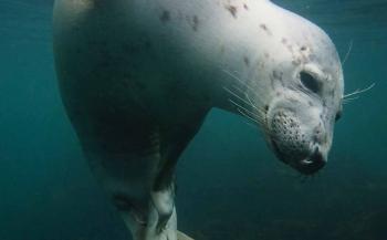 UPY2018 - de top tien Brits water Compact Camera