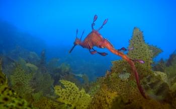 Sverrin Schoonderwoerd - Oceans and Seas, Australia