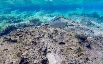 Ayumi Kuramae - Snorkelen in een natuurlijk aquarium