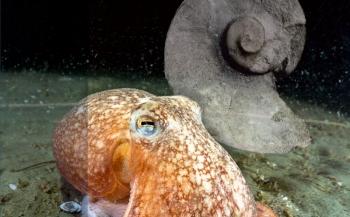 Nu met korting: special over inktvissen