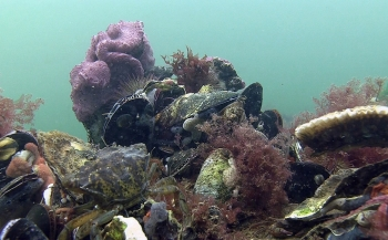 WNF en ARK leggen 3-D riffen aan in Noordzee
