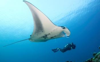 Unieke aanbieding - met Wild Water naar de Malediven!