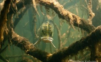 Nature Talks - Willem Kolvoort en het mysterie van natuurlijk licht in zoet water
