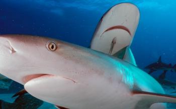 Ilse van Minnen - Verrassend mooi duiken in de Bahama's