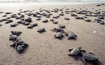 Schildpaddenfestival in Thailand