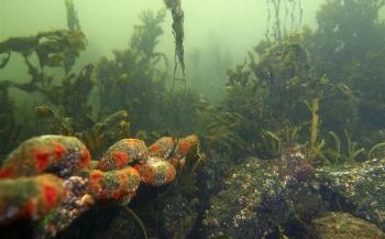 Handige tips voor ZK Onderwaterfotografie