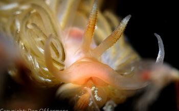 Workshop Onderwaterbiologie met Ron Offermans aan boord van Klipper Anna