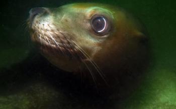 Reportagewedstrijd - Avontuurlijk duiken in Canada