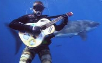 The Great White Shark Song
