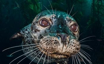 Alex Mustard - een onderwaterfotograaf met passie en visie