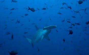 Daan van Schaik - Costa Rica: Cocos Island