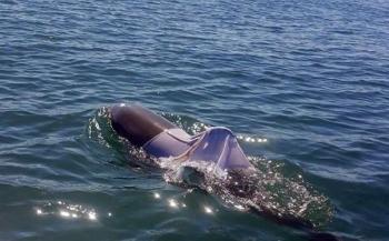 Australië zoekt dolfijn in t-shirt