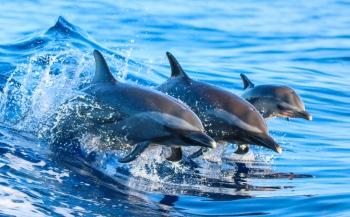 World Oceans Day: vier de oceaan!
