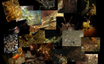 Marloes Otten- Garnalen, garnalen en nog eens garnalen