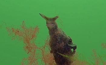 Gery Beeckmans - Een duikje op Den Osse