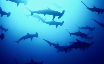 Kinderen halen meer dan 6 ton op voor haaien