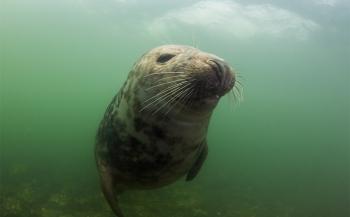 Happie bij groep zeehonden in Zeeland