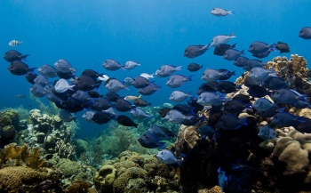 Film: Zombie Coral Reefs