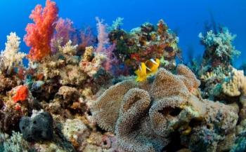 Vissen beschermen zich door middel van nachtmodus
