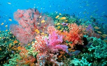 Koralen zien plastic aan voor voedsel