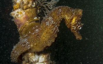 Guylian Seahorses of the World 2014: stuur je foto's in!