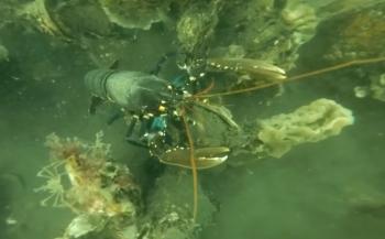 Harry Brummelhuis - Leden van Galathea volgen Specialisatie Onderwaterbiologie