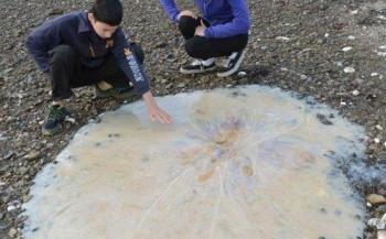 Enorme kwal spoelt aan op Australisch strand