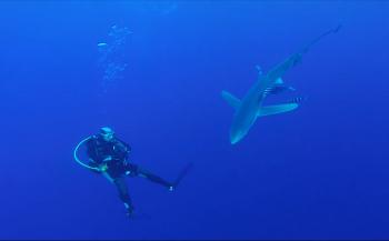 Mirjam van der Sanden - Over haaien, bootjes en zeeziekte