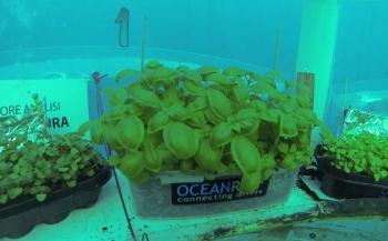 Live: Oogsttijd in Nemo's Underwater Garden
