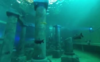 Pierre Gorissen - Duiken bij TODI (360-graden video)