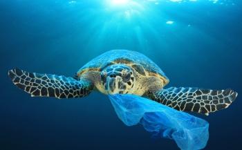 Verbod op wegwerpplastic flinke stap dichterbij