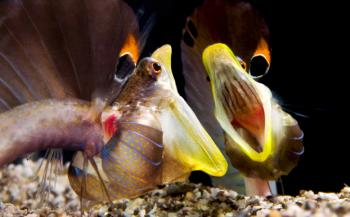 Toponderwaterfotografen geven zesdaagse workshop op St. Eustatius