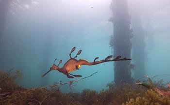 Sverrin Schoonderwoerd - Australia: Blue Ocean