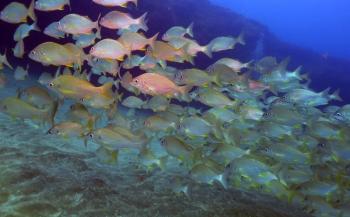 Onderzoekers: zesde van zeeleven zal binnen 80 jaar weg zijn