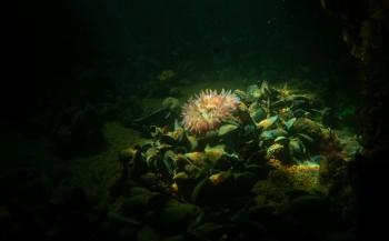 Snorkelen bij de Blokkendam