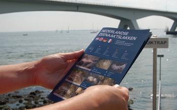 Review: Zoekkaart Nederlandse zeenaaktslakken