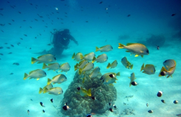 REEFolution - een revolutie in koraal- en visproductie