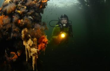 ONK Onderwaterfotografie 2020 - Masters - Groothoek met model