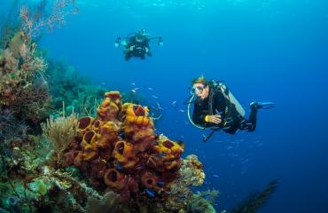 Belize: unbelizable duiken!