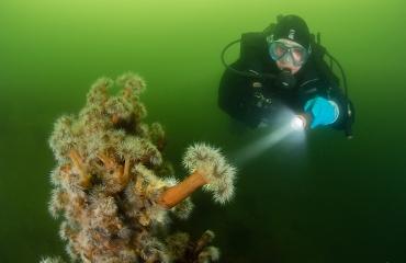 Relatief weinig duikongevallen in Zeeland