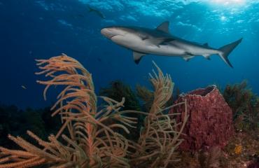 Leendert Smit - Naar de haaien (3)