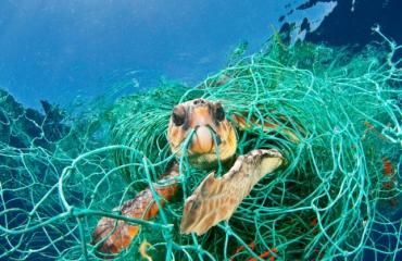 EU moet bijvangst van zeeschildpadden verminderen