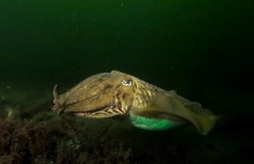 John Landa - Luidruchtige duikers