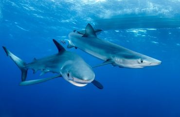 ONK Onderwaterfotografie 2020 - No Limits