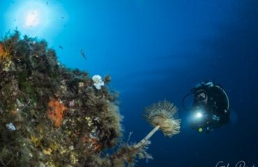 Elba - vier duikstekken waar je wilt duiken!
